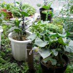 お野菜を植えました!!